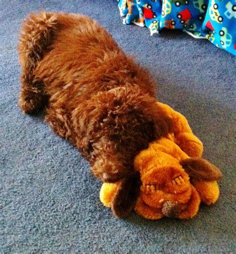 puppy heartbeat pillow puppy heartbeat pillow doodlekisses