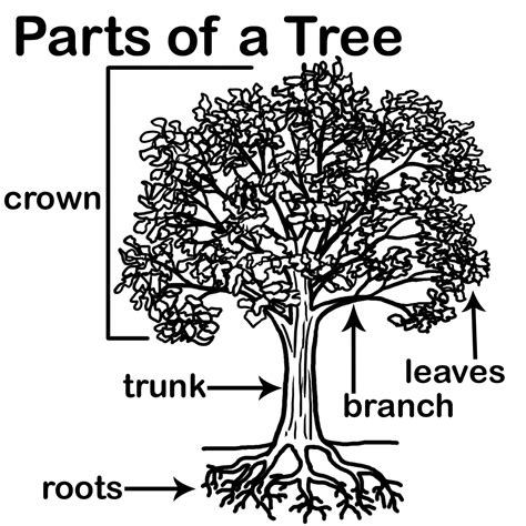 parts of a tree diagram aisdprekshare tree homes unit resources