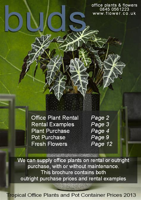 office plants interior landscaping tropical office