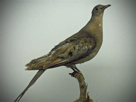 birds carnegie historical museum