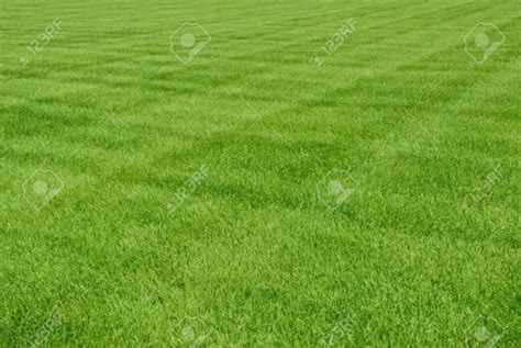 printable grass images 56 free patterns download