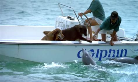 dog boat dolphin dolphin spots two dogs on a boat and goes for the kiss