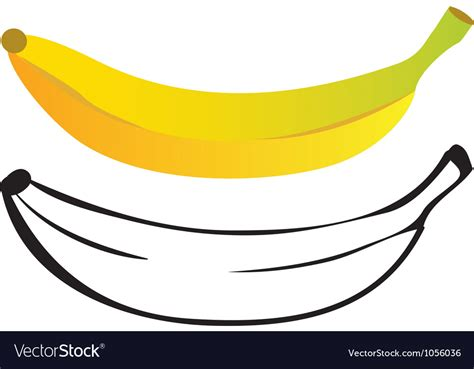 banana color banana color and outline royalty free vector image