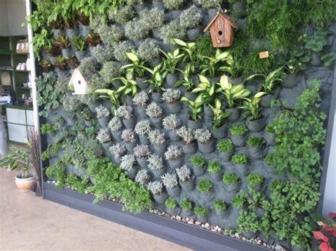 giardino verticale giardino verticale foto di terre tirino capestrano
