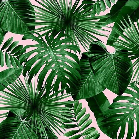 wallpaper leaf design 23 best office ideas images on pinterest green my house