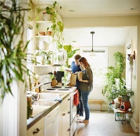 wohnung reinigen nasa empfiehlt diese 5 pflanzen reinigen die luft in