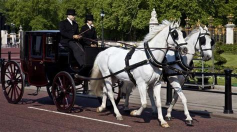 carrozza cavalli in sella o in carrozza per san valentino cavallo magazine