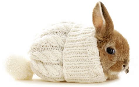 Sweater Rabbits five bunnies in sweaters corel discovery center