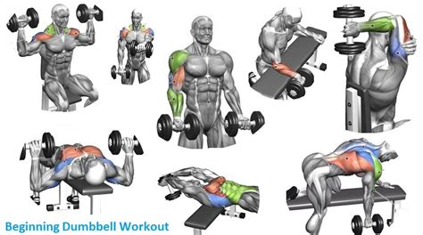bench for dumbbell exercises beginning dumbbell workout easy exercises to get started with dumbbells