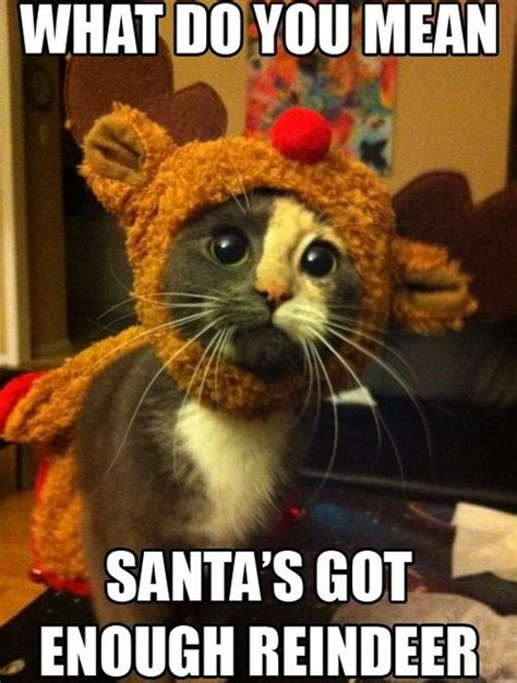 Funny Christmas Memes - meme 2014 christmas kitty jpg