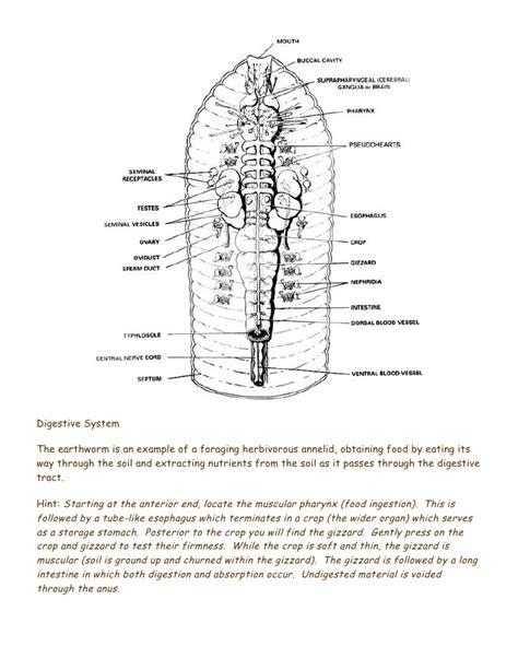 earthworm diagram test earthworm dissection