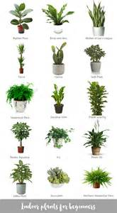 easiest indoor plants indoor plants for beginners