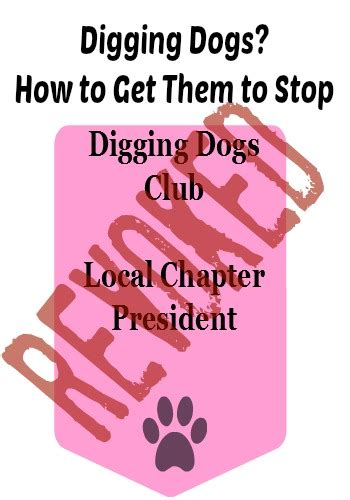 How To Get Your To Stop Shedding So Much by Digging Dogs How To Get Them To Stop