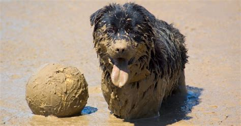 how often should i wash my puppy how often should i wash my rover
