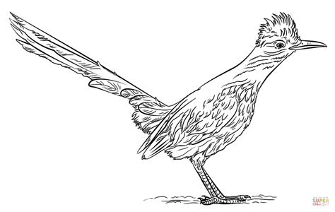roadrunner bird coloring page greater roadrunner coloring page free printable coloring