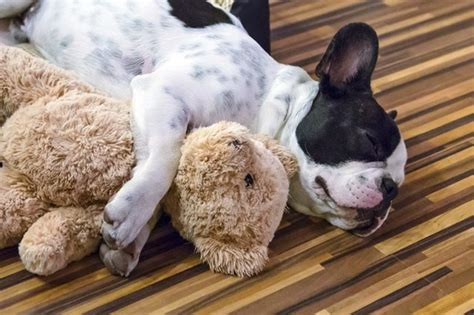 sleep for dogs the average sleep time for dogs cuteness