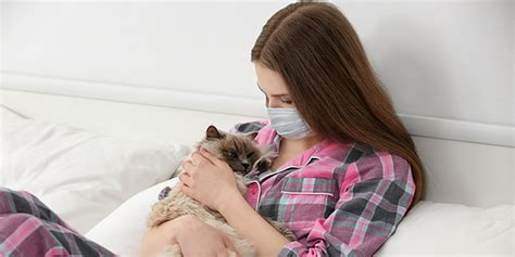 remove cat dander from couch how to get rid of cat dander on couch the best cat 2017