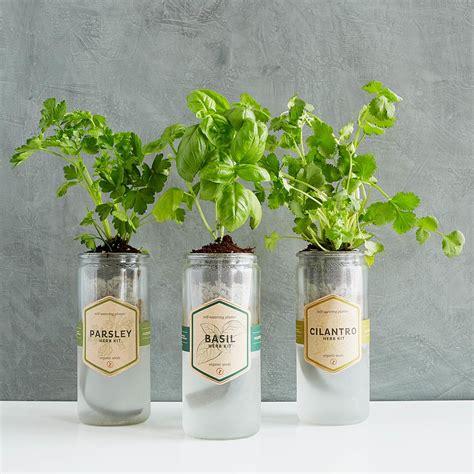 kitchen essentials herb planter indoor herb planter