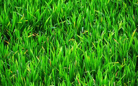 Paper From Grass - grass paper wallpaper wallpapersafari
