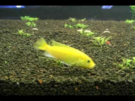 banana fish banana fish