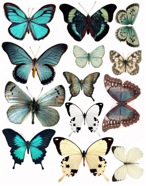 tattoo butterfly vintage 1053 best vintage birds butterfly s images on pinterest