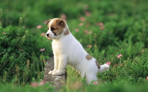 animales vertebrados donde viven como nacen que comen los perros donde viven como nacen