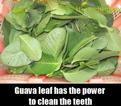 Leaves To Get Teeth Whitened by 5 Wonderful Herbs For Teeth Whitening Ways To