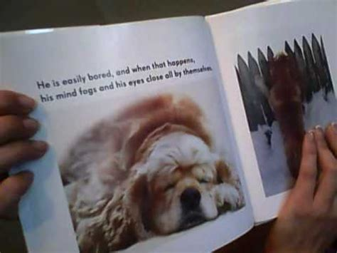 adhd in dogs all dogs adhd read by tailia santo