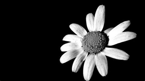 imagenes blanco y negro a color m 225 s que una sonrisa