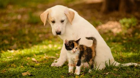 puppy and and cat wallpaper pixelstalk net