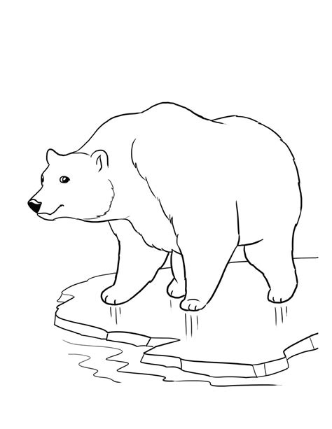 pics photos polar bear coloring pages