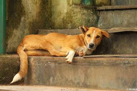 Small Dogs For Home In India India Shelter May