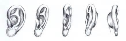 d 233 tails du 2 4 l oreille ailinn
