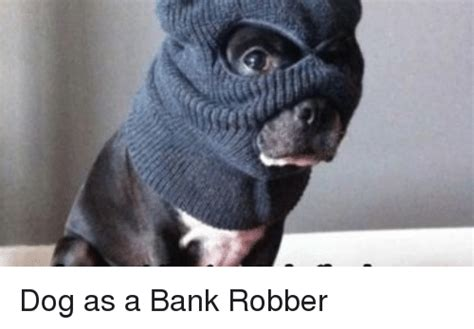 dogs robbing bank as a bank robber meme on astrologymemes
