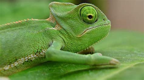 imagenes ojos de reptiles extra 241 os