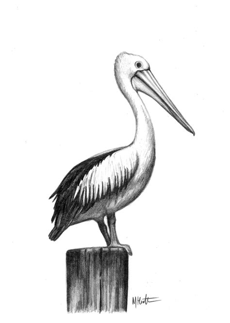pelican tattoo 579 best images about drawing birds how to drawing