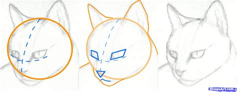 how to draw a how to draw a realistic cat eye step by step archives drawings nocturnal
