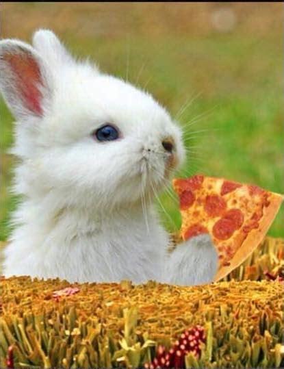 s pizza sinking paparone s pizza home sinking pennsylvania