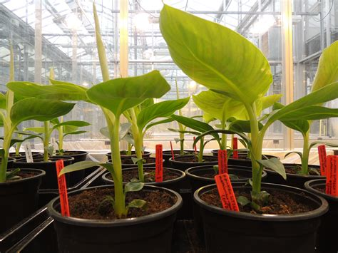 Crop Plant Diseases - team wageningen ur project greenhouse 2014 igem org