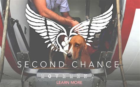 the fast and the furriest second chance cat mystery books second chance movement the key to giving shelter pets