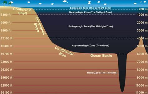 Continental Shelf And Continental Slope by Continental Shelf The And On