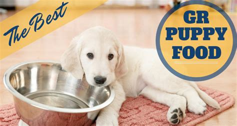 best food for golden retrievers the best puppy food for golden retrievers