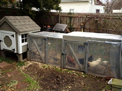 backyard poultry farming city dwellers flock to backyard chicken farming the batavian