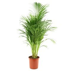 Plante Verte D Intã Rieur Pas Cher Acheter Plantes Vertes Plantes D Int 233 Rieur Jardinerie