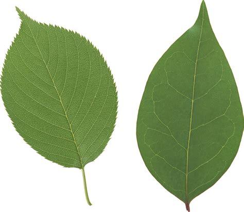 green leaves png image veerendra vijaya pinterest green leaf png for collages pinterest stage design