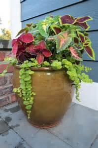 Coleus Planters by 301 Moved Permanently