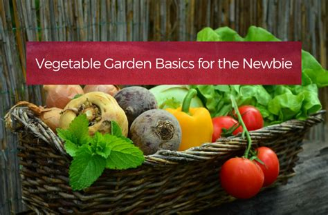 vegetable garden basics for the newbie your home