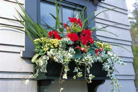 hanging window flower boxes how to hang a window box
