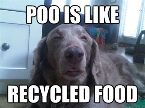 Memes About Dogs - funny dog memes