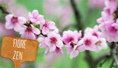 significato fiori di pesco linguaggio dei fiori fiori rosa fiori di pesco e fiori
